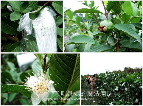 希望廣場農產水果參訪-P5.jpg