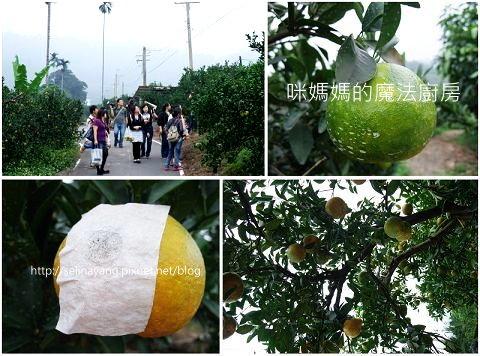 希望廣場農產水果參訪-P7.jpg