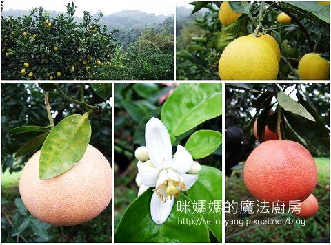 希望廣場農產水果參訪-P10.jpg