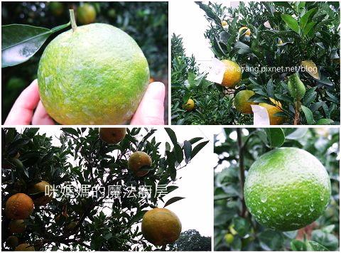 希望廣場農產水果參訪-P9.jpg