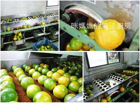希望廣場農產水果參訪-P12.jpg