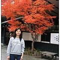 紅到像假的楓葉.jpg