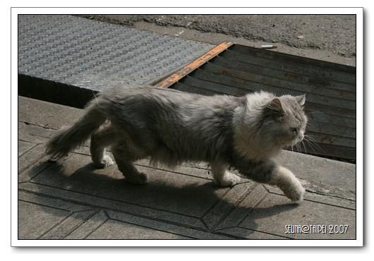 胖貓逛大街.jpg