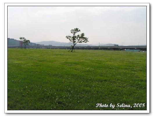 草地.jpg