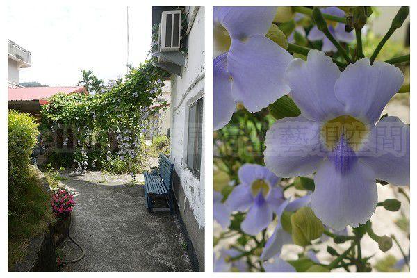 小紫花.jpg