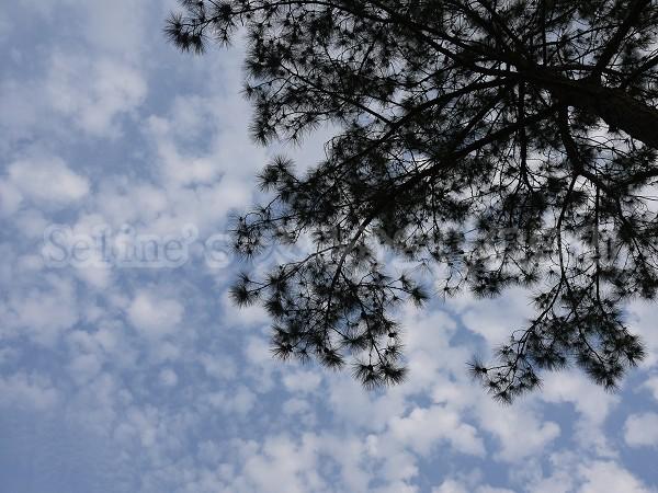 22. 南庄的天空~離開時,我拿起相機往我最喜愛的天空按下快門 意外的一幅美景就攝入我的相片中.jpg