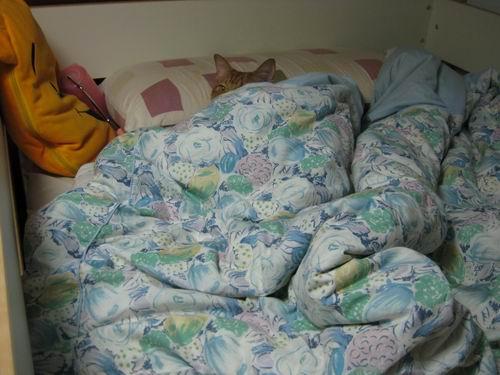 sleep1709.JPG