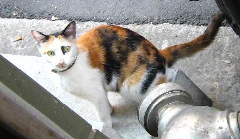 cat_2007.JPG