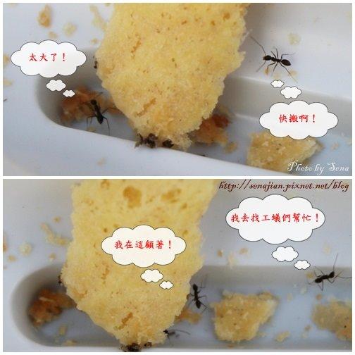 螞蟻3.jpg