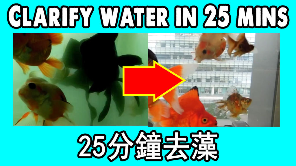 Water Clarifying Agent 水質澄清劑去水藻.jpg