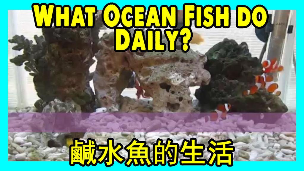 想睇下鹹水魚的生活嗎 Ocean fish Daily Life.jpg