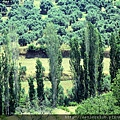 2011_土耳其-席林潔sirince blog (36).jpg