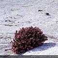 2011_土耳其-棉花堡Pamukkale blog (76).jpg
