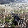 2011_土耳其-希艾拉波利斯遺址Hierapolis blog (14).jpg