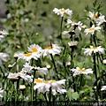 2011_土耳其-烏夫拉拉溪谷Ihlrara Vadisi blog (09).jpg