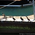 2011_土耳其 Bosphrous Strait 遊船blog (10).jpg