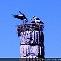 2011_土耳其-阿特米斯神殿 Artemis Tainagi (5).jpg