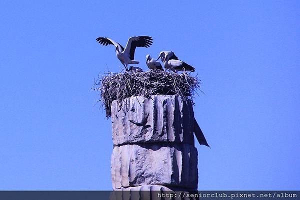 2011_土耳其-阿特米斯神殿 Artemis Tainagi (6).jpg