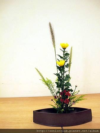 2011 Oct 7 社區插花秋菊 (1).jpg