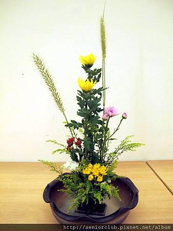 2011 Oct 7 社區插花秋菊 (7).jpg