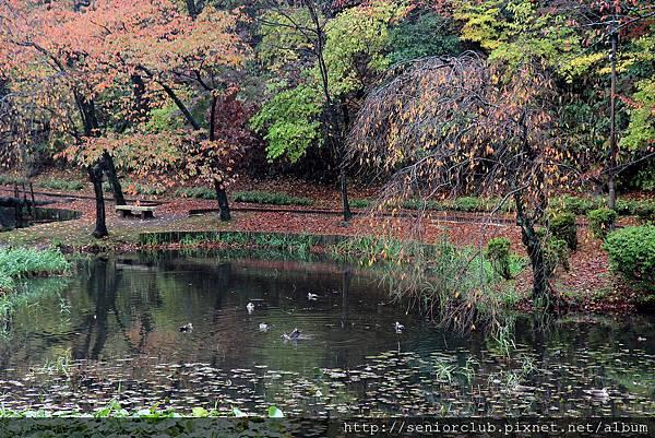 2011 Nov 6 千秋公園 (2)_調整大小.JPG