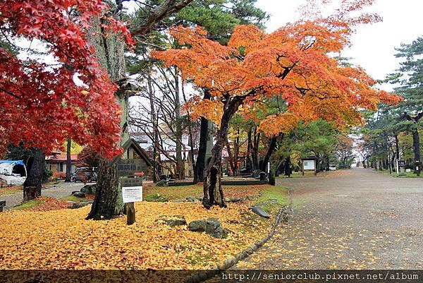 2011 Nov 6 千秋公園 (38)_調整大小.JPG