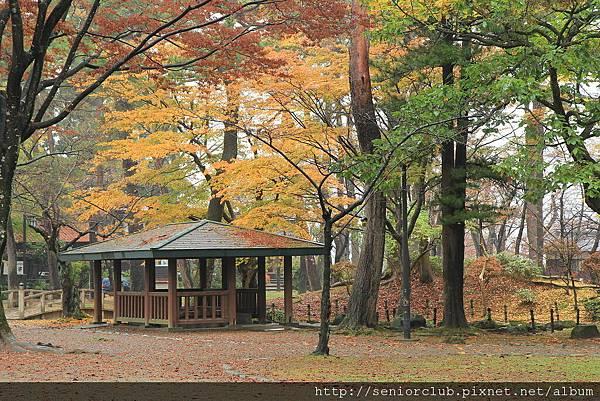 2011 Nov 6 千秋公園 (126)_調整大小.JPG