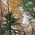2011 Nov 6 千秋公園 (23)_調整大小.JPG