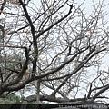 2011 Nov 6 千秋公園 (153)_調整大小.JPG