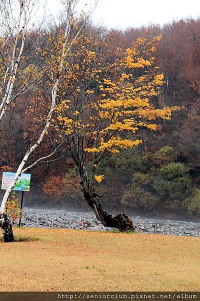2011 Nov 6 法體瀑布 (3)_調整大小.JPG