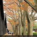 2011 Nov 7 酒田 (36)_調整大小.JPG