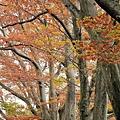 2011 Nov 7 酒田 (39)_調整大小.JPG