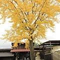 2011 Nov 7 酒田 (52)_調整大小.JPG