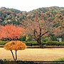 2011 Nov 8 風雅之國 (148)_調整大小.JPG