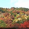2011 Nov 8 風雅之國 (143)_調整大小.JPG
