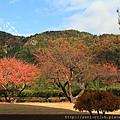 2011 Nov 8 風雅之國 (131)_調整大小.JPG
