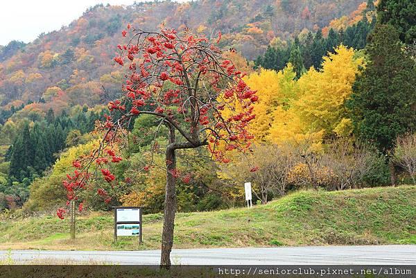 2011 Nov 8 風雅之國 (103)_調整大小.JPG