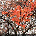 2011 Nov 8 風雅之國 (34)_調整大小.JPG