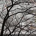2011 Nov 8 風雅之國 (19)_調整大小.JPG