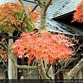 2011 Nov 8 風雅之國 (8)_調整大小.JPG