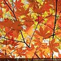 2011 Nov 8 鳴子峽 (122)_調整大小.JPG