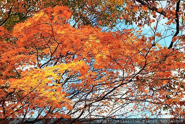 2011 Nov 8 鳴子峽 (119)_調整大小.JPG