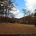 2011 Nov 8 鳴子峽 (30)_調整大小.JPG