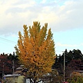 2011 Nov 8 嚴美溪 (56)_調整大小.jpg