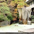 2011 Nov 8 天童溫泉 瀧之湯 (13)_調整大小.JPG