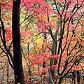 Nov 9 花捲 (150)_調整大小.jpg