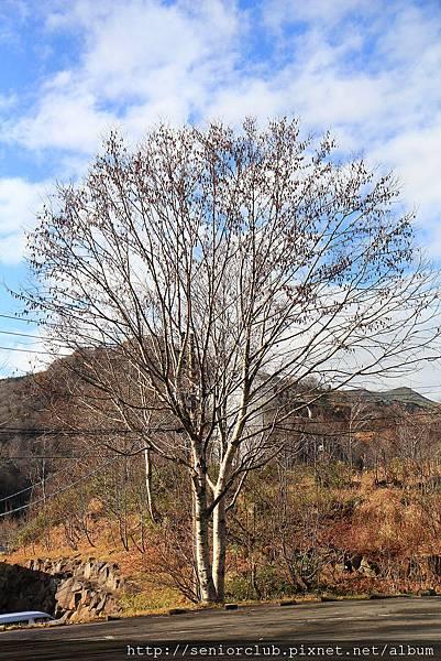 Nov 9 八幡平 松川溪谷 (64)_調整大小.JPG
