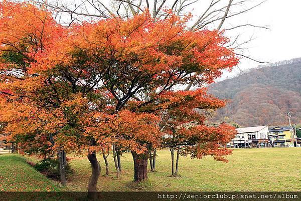 Nov 9 十和田湖 (233)_調整大小.JPG