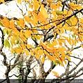 Nov 9 十和田湖 (207)_調整大小.JPG