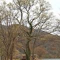 Nov 9 十和田湖 (186)_調整大小.JPG